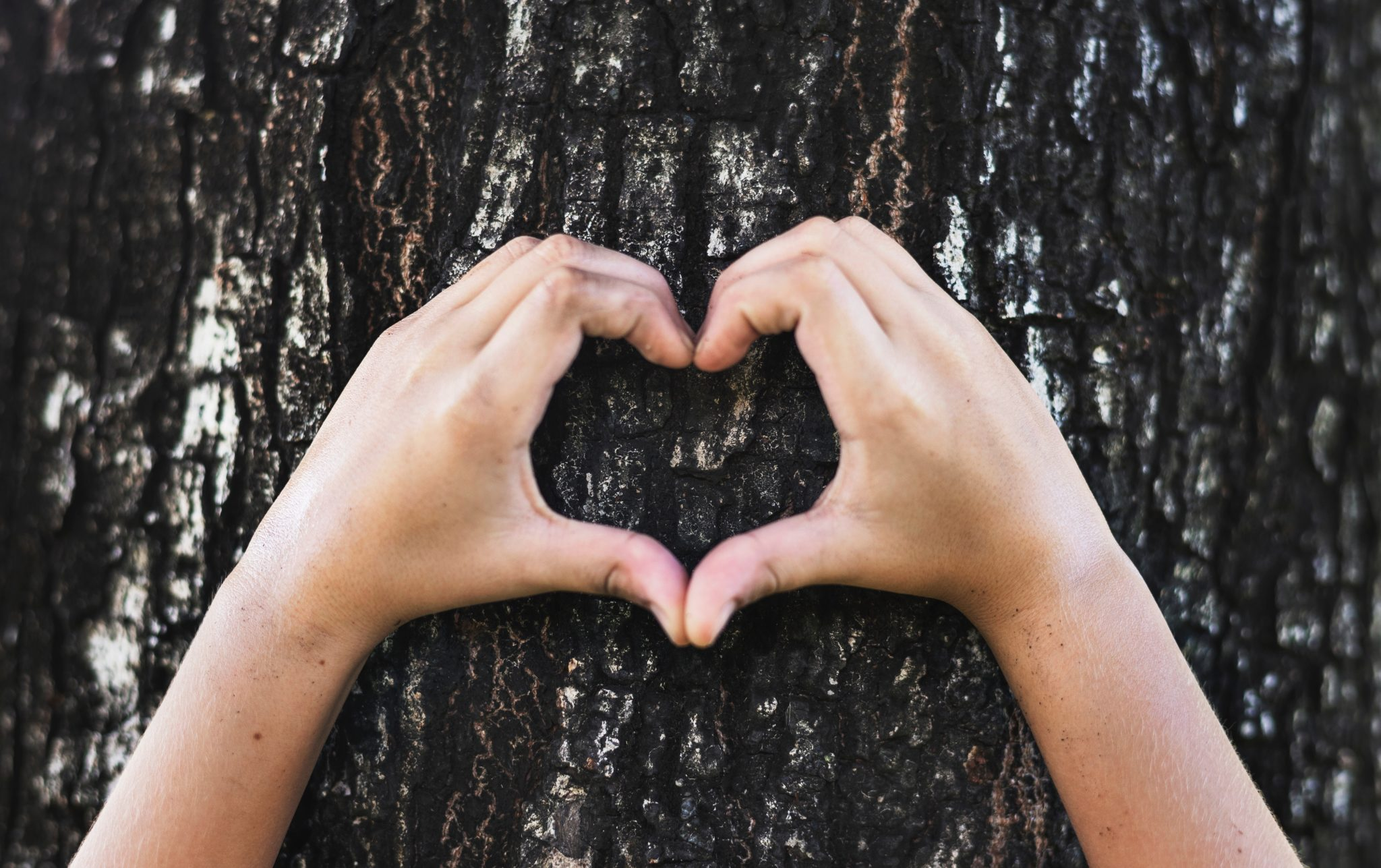 Händer som formar ett hjärta framför en trädstam